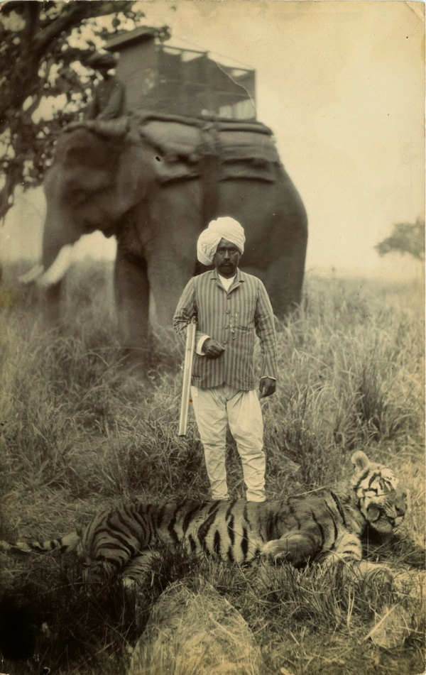 Tiger Hunting in India, ca. 1920s